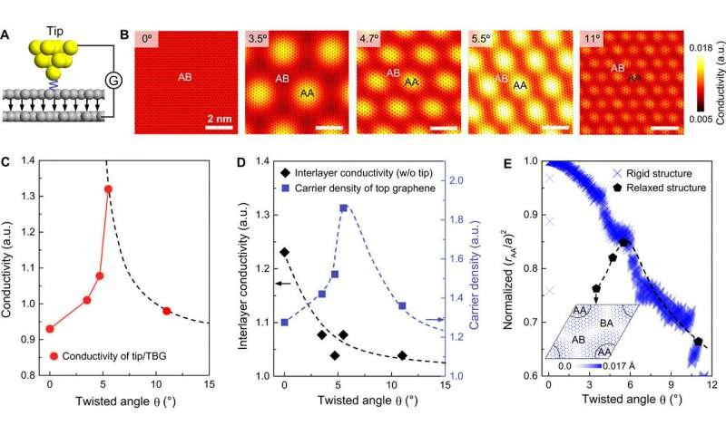 Evolutions of conductivity, carrier density, and atomic configurations of TBG with twist angle. (A) Schematic showing the simulation model of c-AFM. (B) Simulated local conductivity maps of TBGs with twist angles of 0°, 3.5°, 4.7°, 5.5°, and 11°, respectively. (C and D) Averaged tip/TBG junction conductivity (C), TBG interlayer conductivity, and averaged carrier density of the top-layer graphene (D) calculated for different twist angles. (E) Normalized areal fraction of the AA-stacked region in moiré superlattice (rAA/a)2 calculated using relaxed and rigid atomic stacking structures. The inset shows the in-plane atomic displacements after relaxation for TBG with a twist angle of 3.5°. The dashed lines are schematically drawn to highlight the trend. Credit: Science Advances, doi: 10.1126/sciadv.abc5555